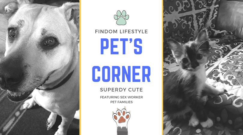 pet family feature